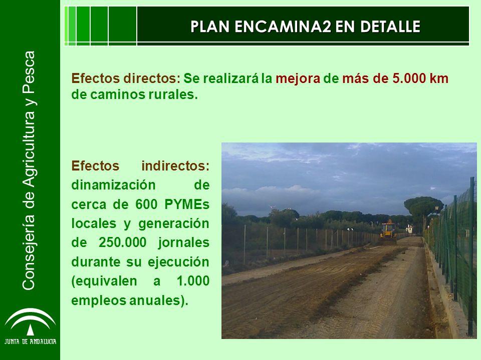 Consejería de Agricultura y Pesca PLAN ENCAMINA2 EN DETALLE Efectos indirectos: dinamización de cerca de 600 PYMEs locales y generación de 250.000 jor