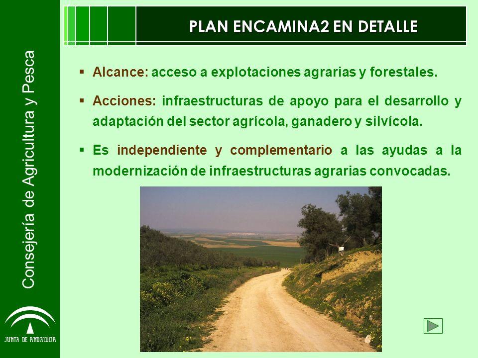 Consejería de Agricultura y Pesca PLAN ENCAMINA2 EN DETALLE Alcance: acceso a explotaciones agrarias y forestales. Acciones: infraestructuras de apoyo