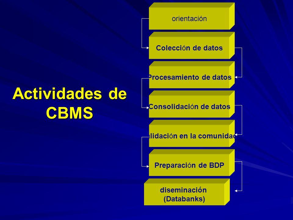 Actividades de CBMS orientación Colección de datos Procesamiento de datos Validación en la comunidad Consolidación de datos Preparación de BDP diseminación (Databanks)