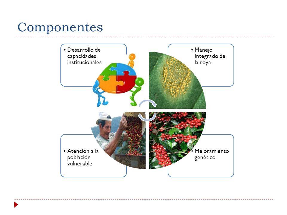 Objetivos específicos 1. Realizar de forma sistemática y efectiva las acciones de manejo integrado de la roya. 2. Impulsar el mejoramiento genético de