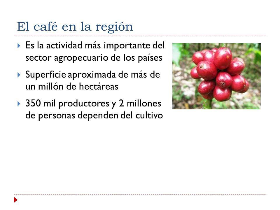 El café en la región Es la actividad más importante del sector agropecuario de los países Superficie aproximada de más de un millón de hectáreas 350 mil productores y 2 millones de personas dependen del cultivo