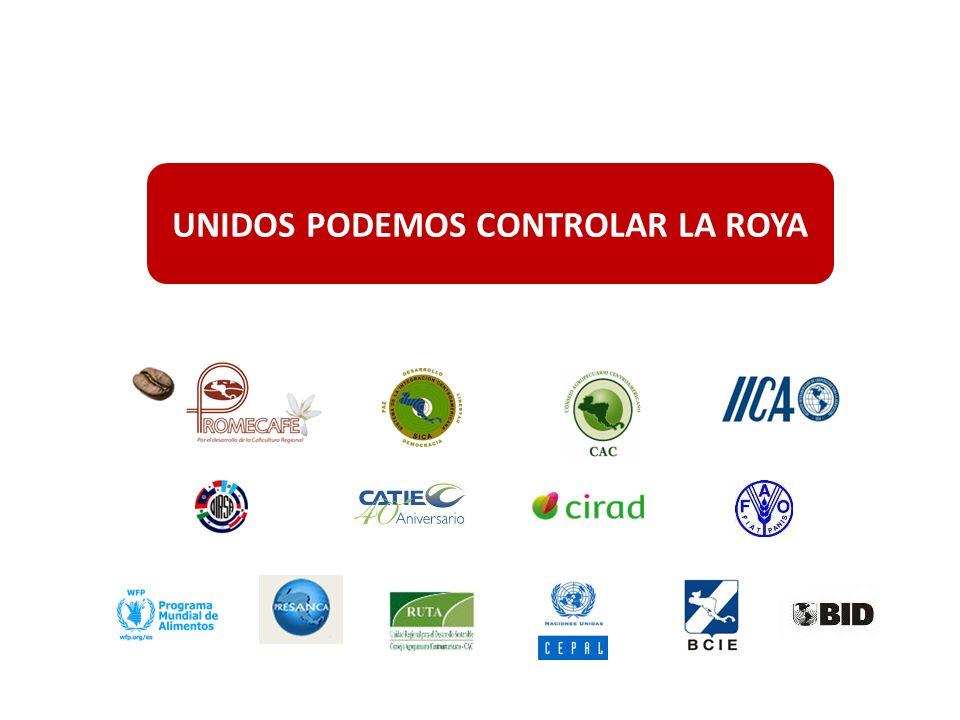 Renovación de cafetales (3) IICA-BCIE Proceso de pre inversión en los países (renovación y rehabilitación de cafetales) (en marcha) Actores: IICA; Institución cafetalera; BCIE; Ministerio Agricultura; Otros Costo total estimado, cuatros años de ejecución, US$ 800 millones