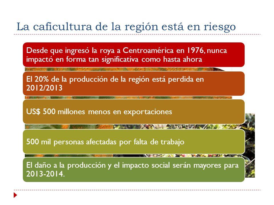 Desde que ingresó la roya a Centroamérica en 1976, nunca impactó en forma tan significativa como hasta ahora El 20% de la producción de la región está perdida en 2012/2013 US$ 500 millones menos en exportaciones 500 mil personas afectadas por falta de trabajo El daño a la producción y el impacto social serán mayores para 2013-2014.