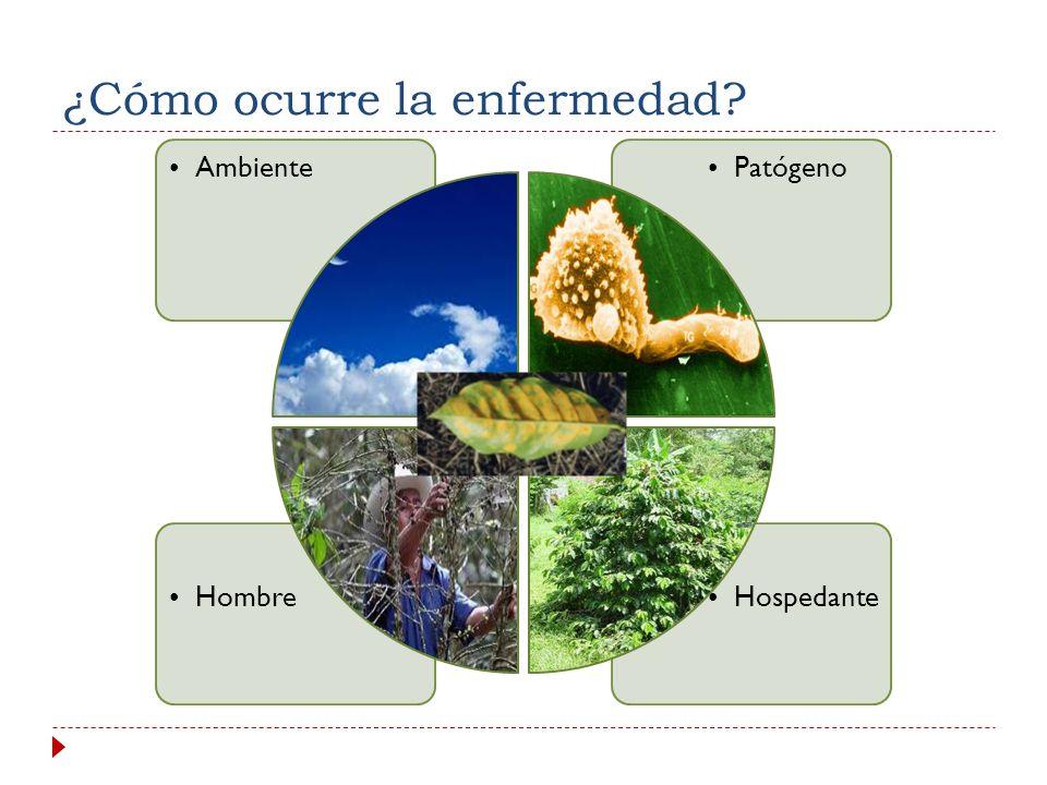 Principios orientadores para asegurar el enfoque integral: PLAN DE ACCION CON MEDIDAS INMEDIATAS 2013