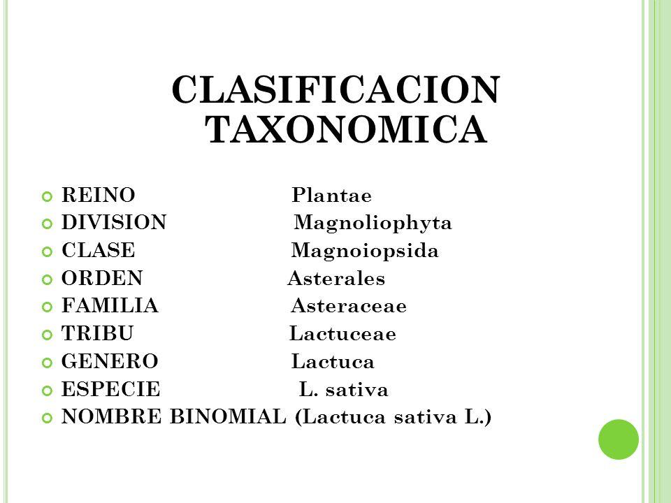 CLASIFICACION TAXONOMICA REINO Plantae DIVISION Magnoliophyta CLASE Magnoiopsida ORDEN Asterales FAMILIA Asteraceae TRIBU Lactuceae GENERO Lactuca ESP
