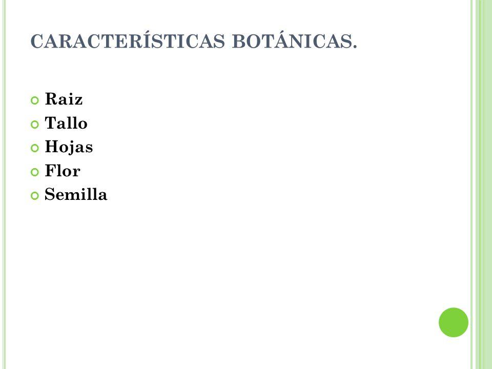 CARACTERÍSTICAS BOTÁNICAS. Raiz Tallo Hojas Flor Semilla