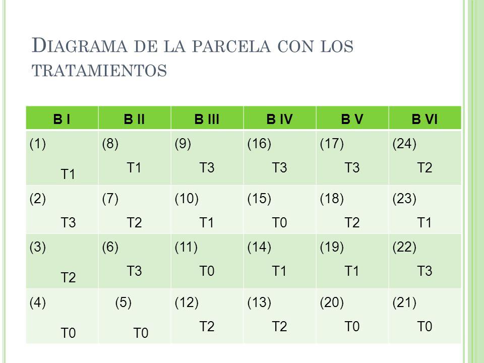 D IAGRAMA DE LA PARCELA CON LOS TRATAMIENTOS B IB IIB IIIB IVB VB VI (1) T1 (8) T1 (9) T3 (16) T3 (17) T3 (24) T2 (2) T3 (7) T2 (10) T1 (15) T0 (18) T