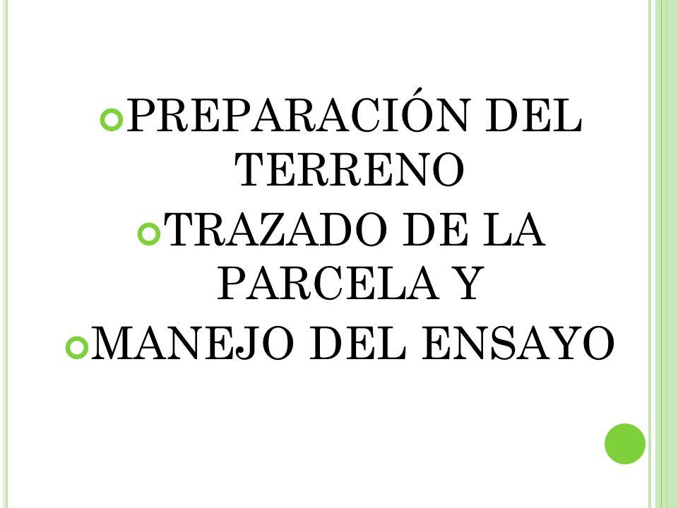 PREPARACIÓN DEL TERRENO TRAZADO DE LA PARCELA Y MANEJO DEL ENSAYO