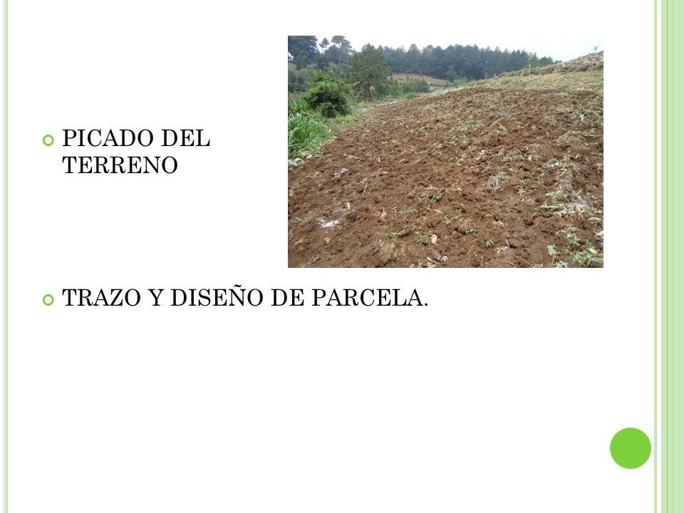 PICADO DEL TERRENO TRAZO Y DISEÑO DE PARCELA.