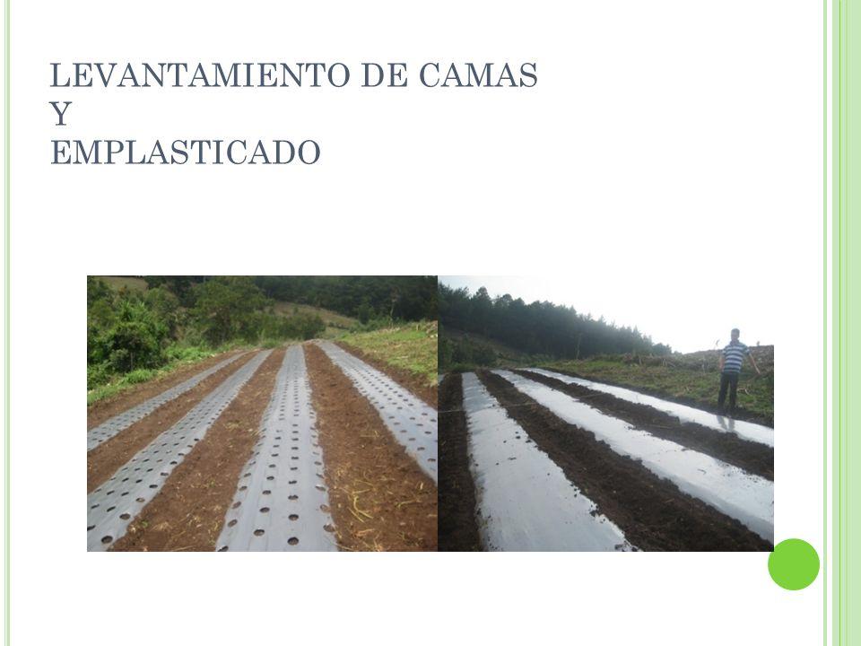 LEVANTAMIENTO DE CAMAS Y EMPLASTICADO