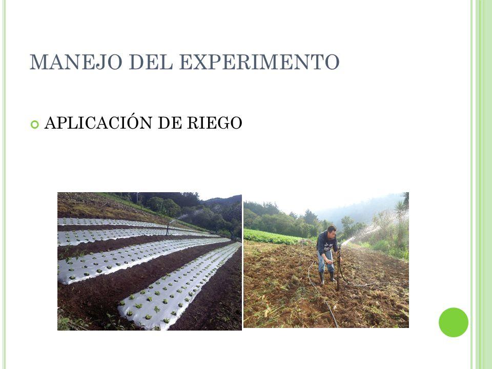 MANEJO DEL EXPERIMENTO APLICACIÓN DE RIEGO