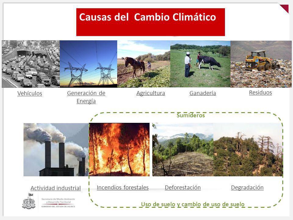 Causas del Cambio Climático AgriculturaGanadería DeforestaciónIncendios forestalesDegradación Causas del Cambio Climático Vehículos Actividad industri