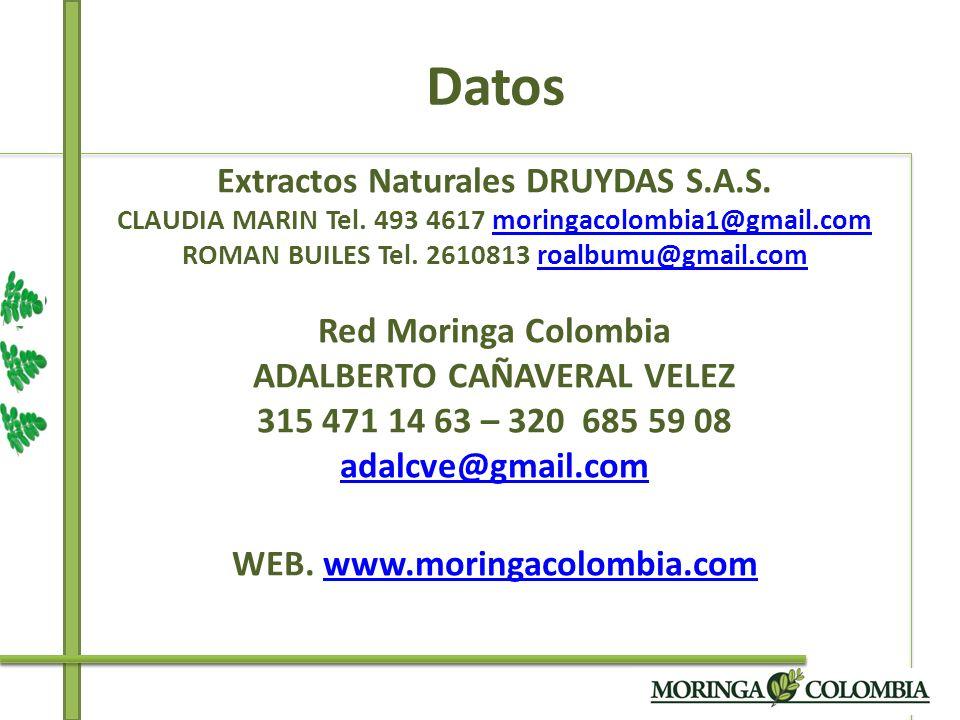 Datos Extractos Naturales DRUYDAS S.A.S. CLAUDIA MARIN Tel. 493 4617 moringacolombia1@gmail.com ROMAN BUILES Tel. 2610813 roalbumu@gmail.com Red Morin