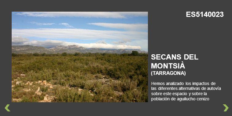 Hemos analizado los impactos de las diferentes alternativas de autovía sobre este espacio y sobre la población de aguilucho cenizo SECANS DEL MONTSIÀ (TARRAGONA) ES5140023