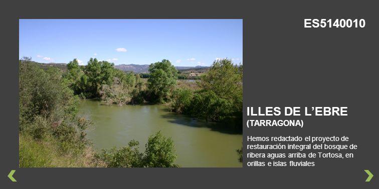 Hemos redactado el proyecto de restauración integral del bosque de ribera aguas arriba de Tortosa, en orillas e islas fluviales ILLES DE LEBRE (TARRAGONA) ES5140010