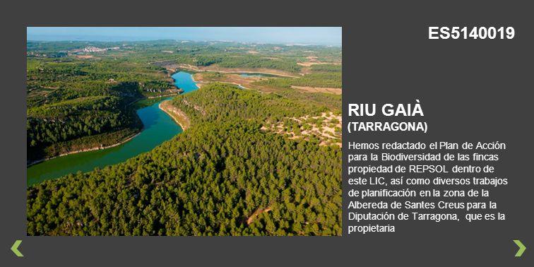 Hemos redactado el Plan de Acción para la Biodiversidad de las fincas propiedad de REPSOL dentro de este LIC, así como diversos trabajos de planificación en la zona de la Albereda de Santes Creus para la Diputación de Tarragona, que es la propietaria RIU GAIÀ (TARRAGONA) ES5140019