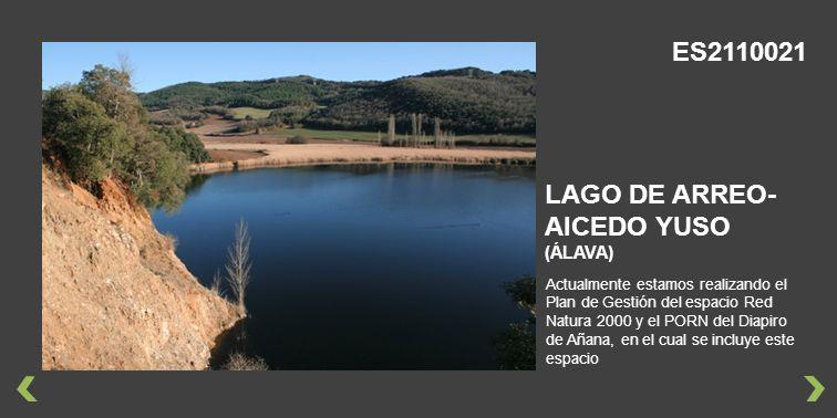 Actualmente estamos realizando el Plan de Gestión del espacio Red Natura 2000 y el PORN del Diapiro de Añana, en el cual se incluye este espacio LAGO DE ARREO- AICEDO YUSO (ÁLAVA) ES2110021