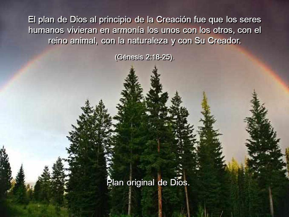 El plan de Dios al principio de la Creación fue que los seres humanos vivieran en armonía los unos con los otros, con el reino animal, con la naturaleza y con Su Creador.