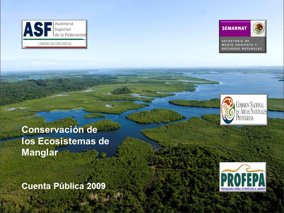 Conservación de los Ecosistemas de Manglar Cuenta Pública 2009