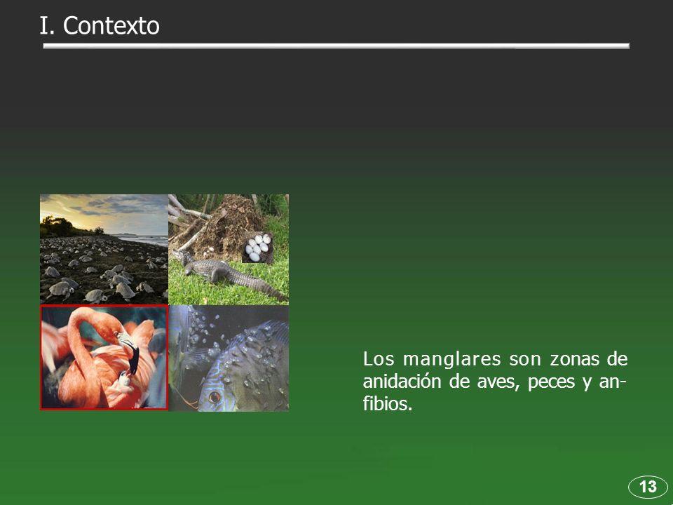 13 Los manglares son z Los manglares son zonas de anidación de aves, peces y an- fibios. I. Contexto