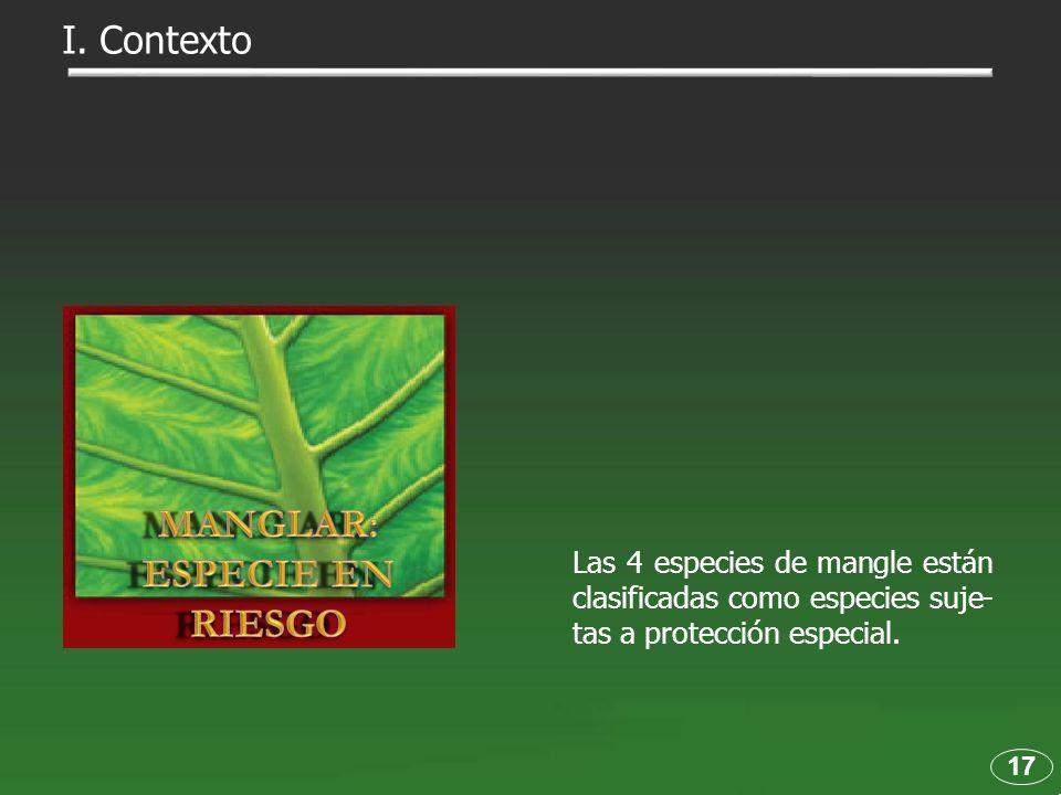 Las 4 especies de mangle están clasificadas como especies suje- tas a protección especial. 17 I. Contexto