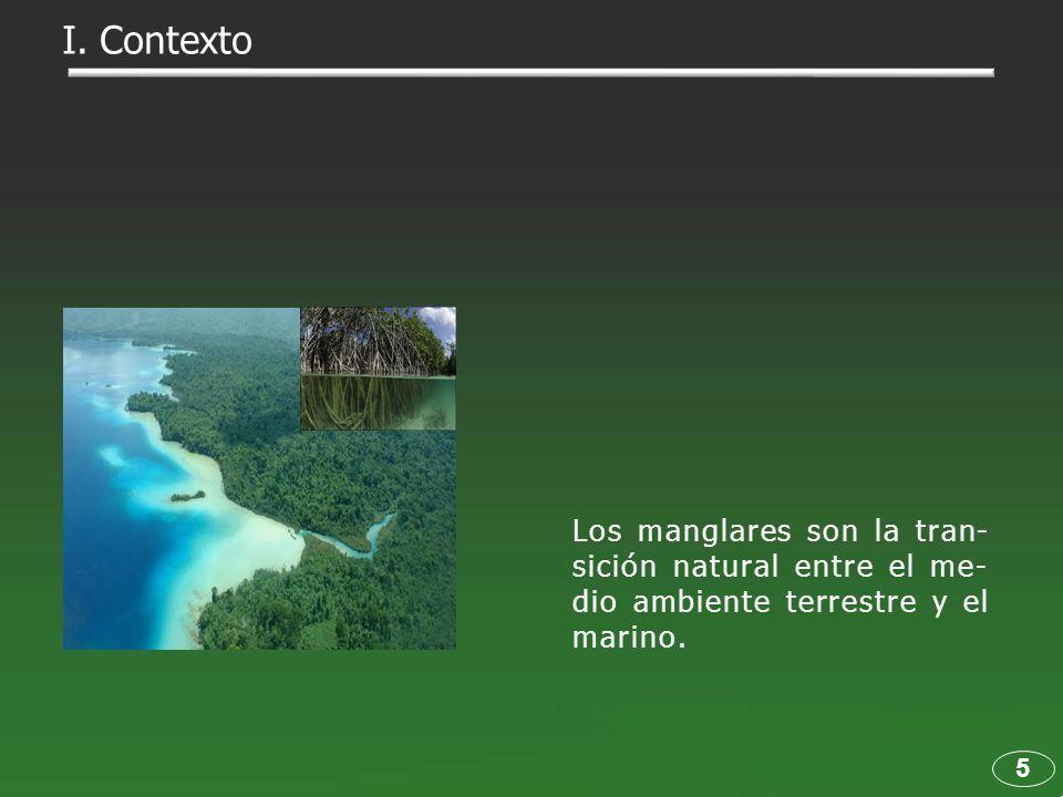 5 Los manglares son la tran- sición natural entre el me- dio ambiente terrestre y el marino. I. Contexto