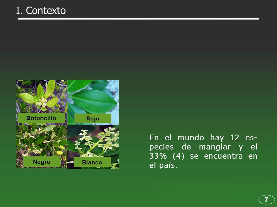 Blanco Rojo Negro Botoncillo En el mundo hay 12 es- pecies de manglar y el 33% (4) se encuentra en el país. 7 I. Contexto