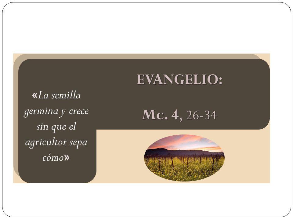 EVANGELIO: Mc. 4, 26-34 « La semilla germina y crece sin que el agricultor sepa cómo »