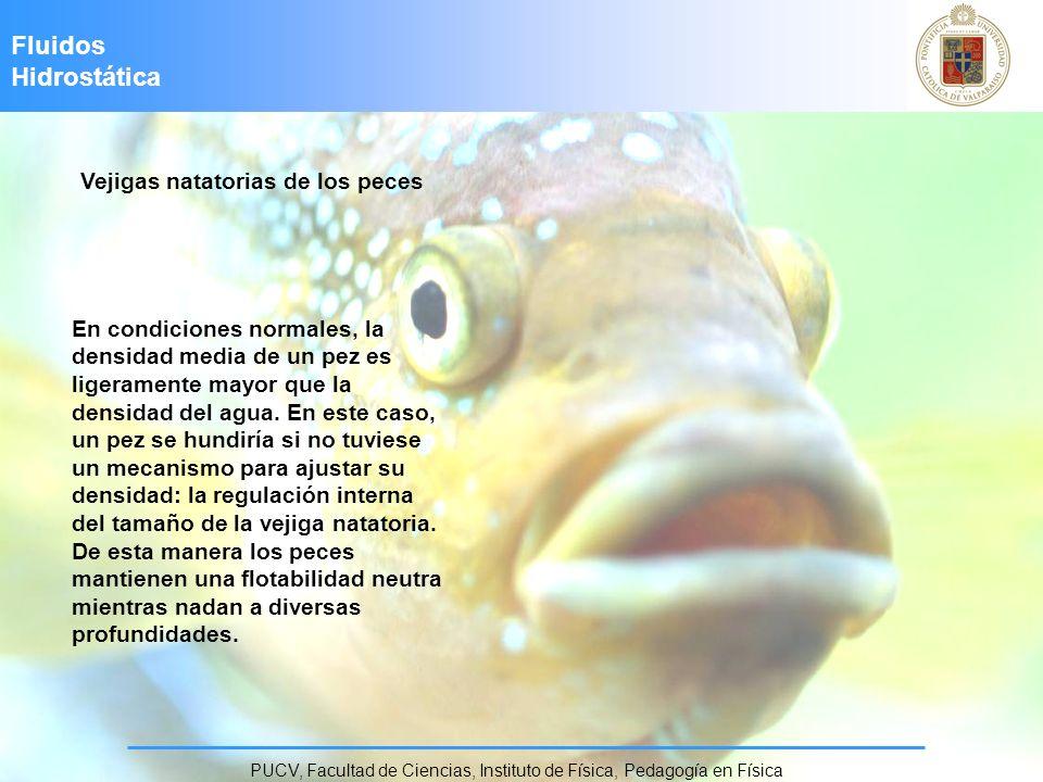 Fluidos Hidrostática PUCV, Facultad de Ciencias, Instituto de Física, Pedagogía en Física Vejigas natatorias de los peces En condiciones normales, la