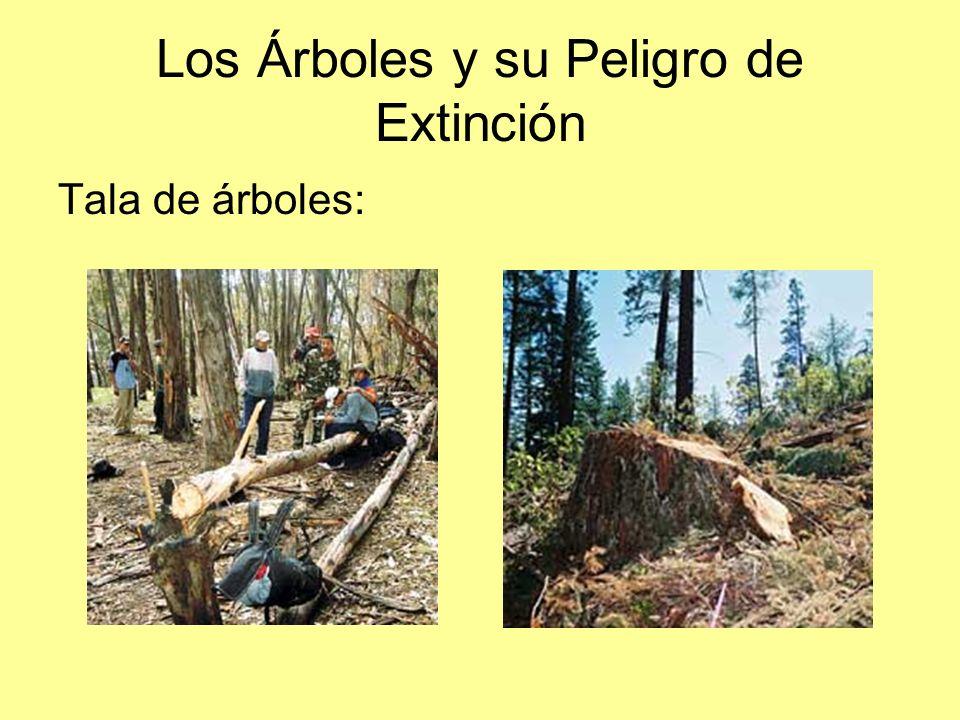 Los Árboles y su Peligro de Extinción Tala de árboles: