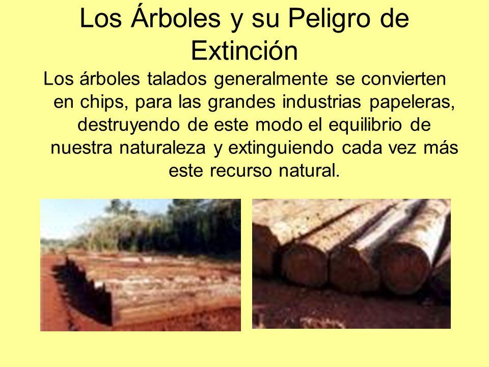 Los Árboles y su Peligro de Extinción Los árboles talados generalmente se convierten en chips, para las grandes industrias papeleras, destruyendo de e