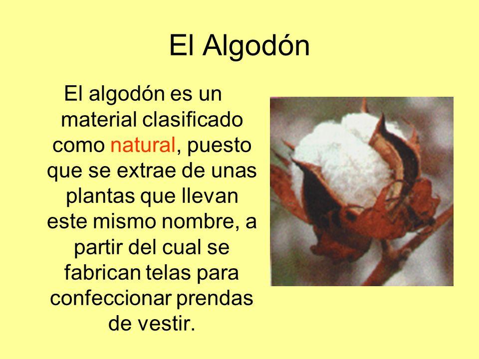 El Algodón El algodón es un material clasificado como natural, puesto que se extrae de unas plantas que llevan este mismo nombre, a partir del cual se