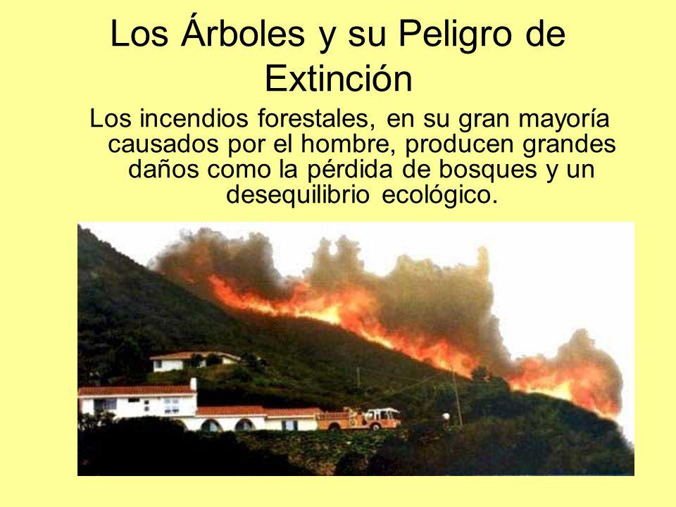 Los Árboles y su Peligro de Extinción Los incendios forestales, en su gran mayoría causados por el hombre, producen grandes daños como la pérdida de b