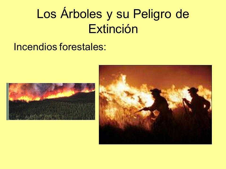 Los Árboles y su Peligro de Extinción Incendios forestales: