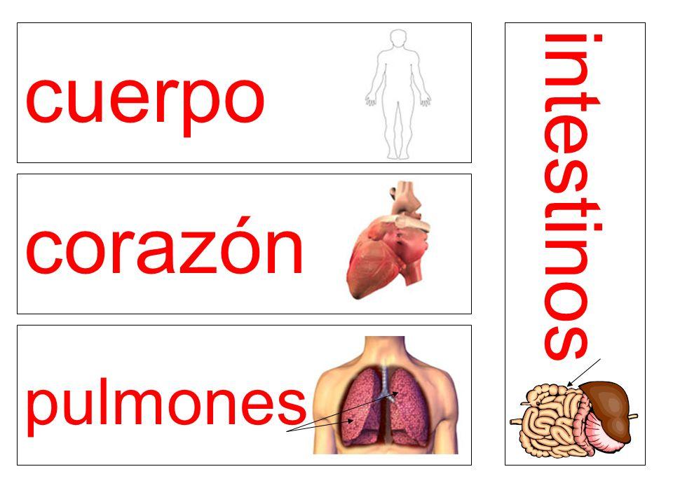 cuerpo corazón pulmones intestinos