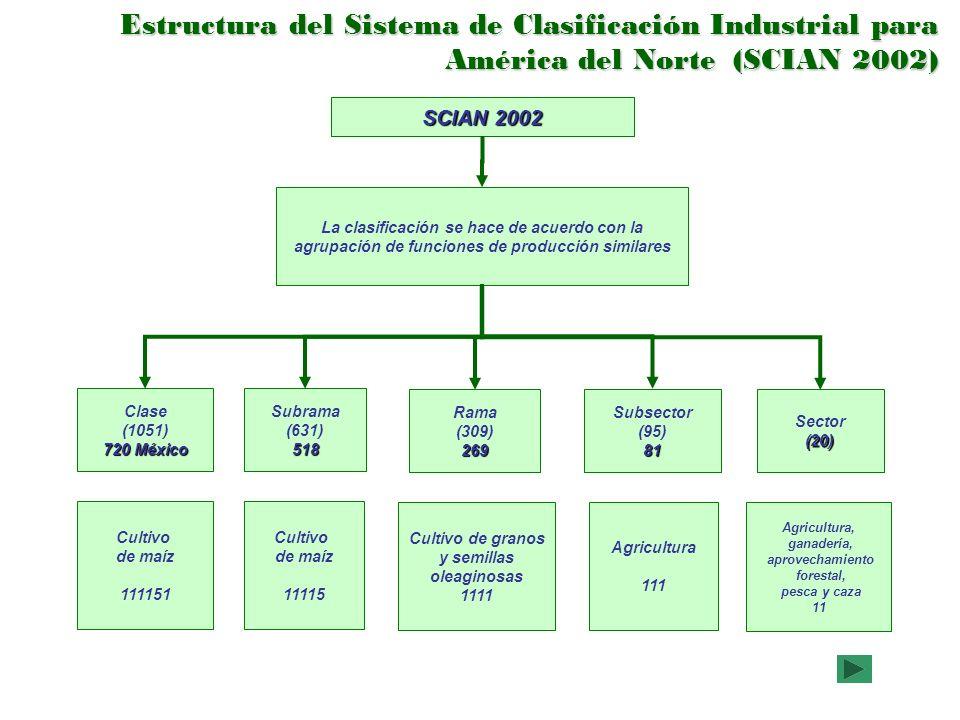SCIAN 2002 La clasificación se hace de acuerdo con la agrupación de funciones de producción similares Sector(20) Subsector (95)81 Rama (309)269 Subram