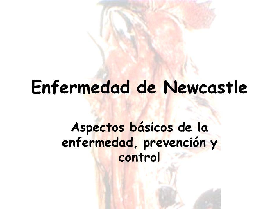 Enfermedad de Newcastle Aspectos básicos de la enfermedad, prevención y control
