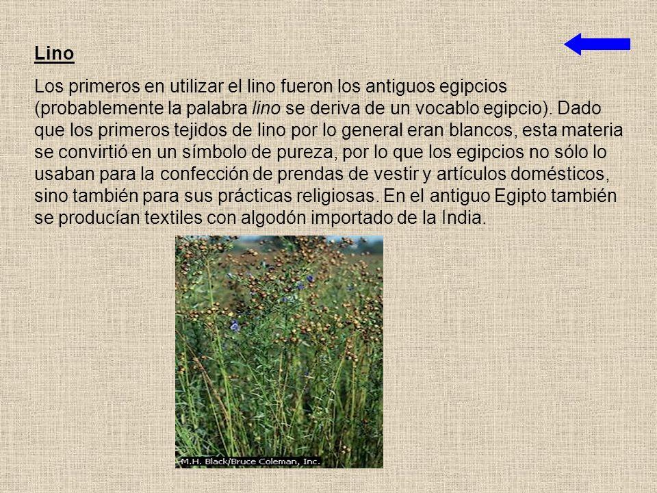 Algodón Aunque el algodón es la fibra textil más común en la actualidad, fue la última fibra natural en alcanzar importancia comercial. En el siglo V