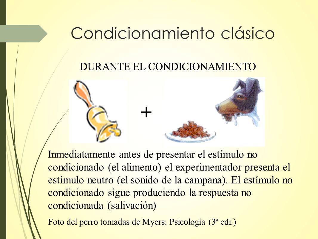Condicionamiento clásico DURANTE EL CONDICIONAMIENTO Inmediatamente antes de presentar el estímulo no condicionado (el alimento) el experimentador presenta el estímulo neutro (el sonido de la campana).