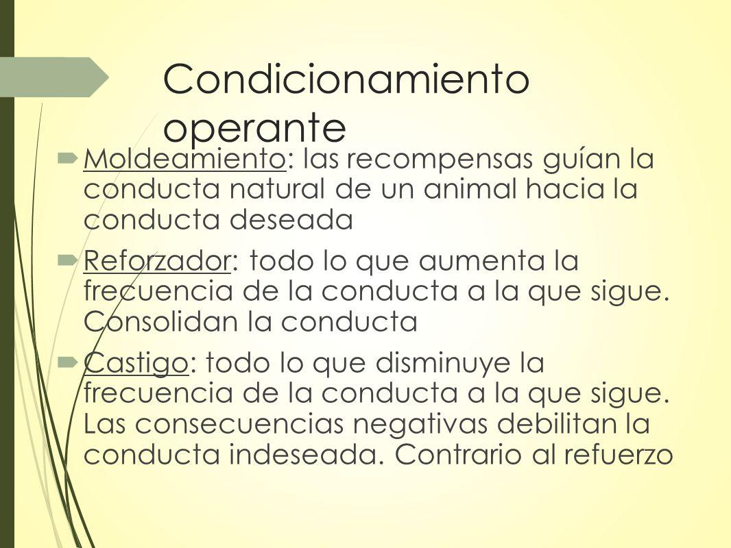 Condicionamiento operante Moldeamiento: las recompensas guían la conducta natural de un animal hacia la conducta deseada Reforzador: todo lo que aumenta la frecuencia de la conducta a la que sigue.