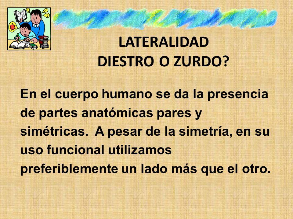 DESARROLLO DE LAS ETAPAS PRELATERALES El patrón cruzado es necesario y previo a la etapa de la lateralización completa.