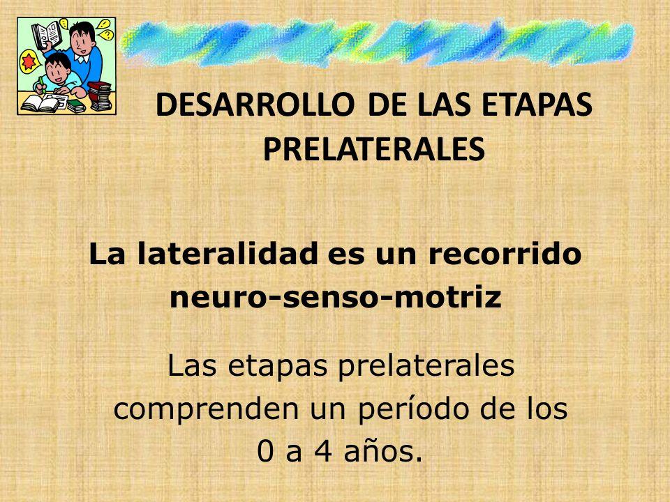 DESARROLLO DE LAS ETAPAS PRELATERALES La lateralidad es un recorrido neuro-senso-motriz Las etapas prelaterales comprenden un período de los 0 a 4 año