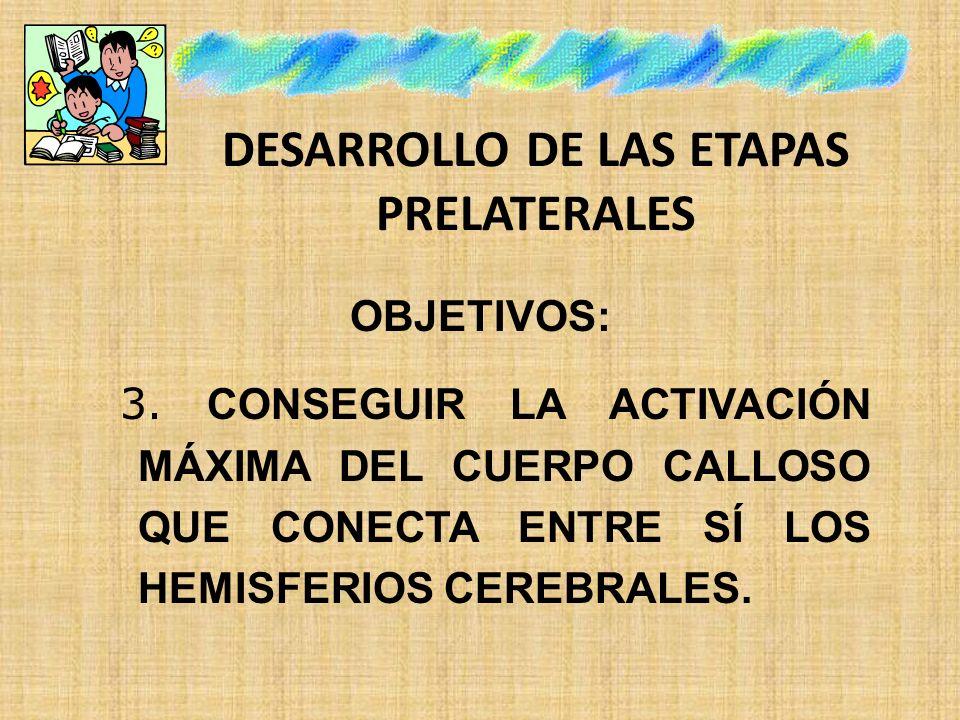 DESARROLLO DE LAS ETAPAS PRELATERALES OBJETIVOS: 3. CONSEGUIR LA ACTIVACIÓN MÁXIMA DEL CUERPO CALLOSO QUE CONECTA ENTRE SÍ LOS HEMISFERIOS CEREBRALES.