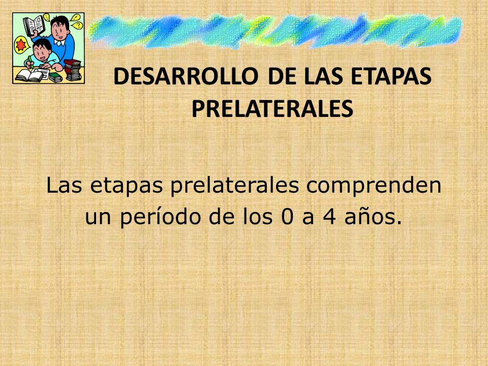 DESARROLLO DE LAS ETAPAS PRELATERALES Las etapas prelaterales comprenden un período de los 0 a 4 años.