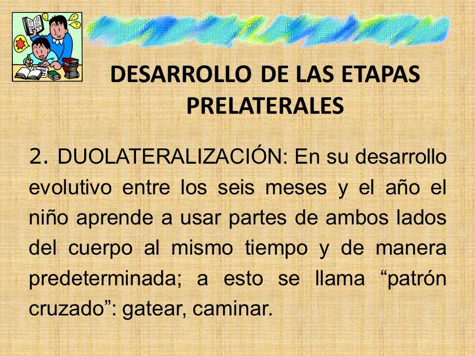 DESARROLLO DE LAS ETAPAS PRELATERALES 2. DUOLATERALIZACIÓN: En su desarrollo evolutivo entre los seis meses y el año el niño aprende a usar partes de