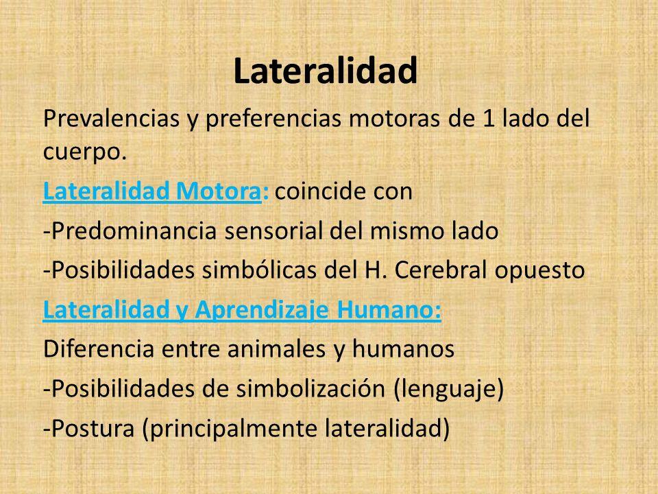 Lateralidad Prevalencias y preferencias motoras de 1 lado del cuerpo. Lateralidad Motora: coincide con -Predominancia sensorial del mismo lado -Posibi