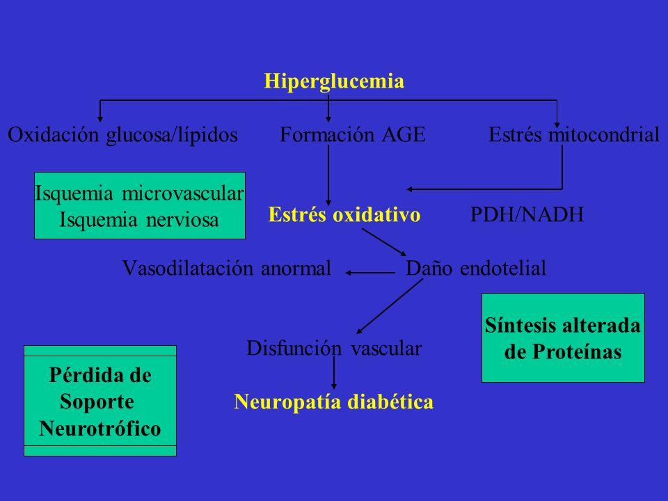Hiperglucemia Oxidación glucosa/lípidos Formación AGE Estrés mitocondrial Estrés oxidativo PDH/NADH Vasodilatación anormal Daño endotelial Disfunción