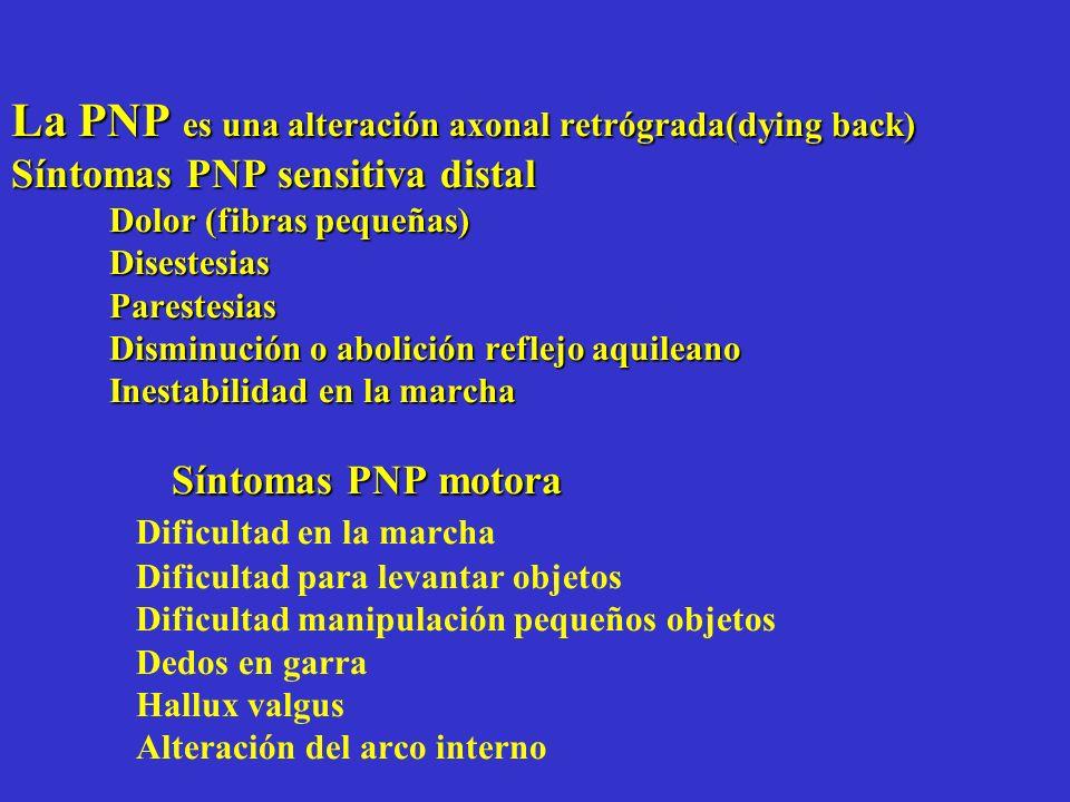 La PNP es una alteración axonal retrógrada(dying back) Síntomas PNP sensitiva distal Dolor (fibras pequeñas) Disestesias Parestesias Disminución o abo