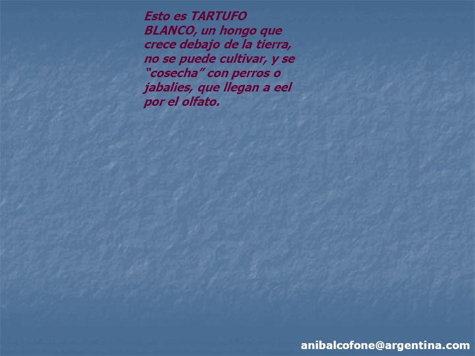 anibalcofone@argentina.com Esto es TARTUFO BLANCO, un hongo que crece debajo de la tierra, no se puede cultivar, y se cosecha con perros o jabalies, que llegan a eel por el olfato.