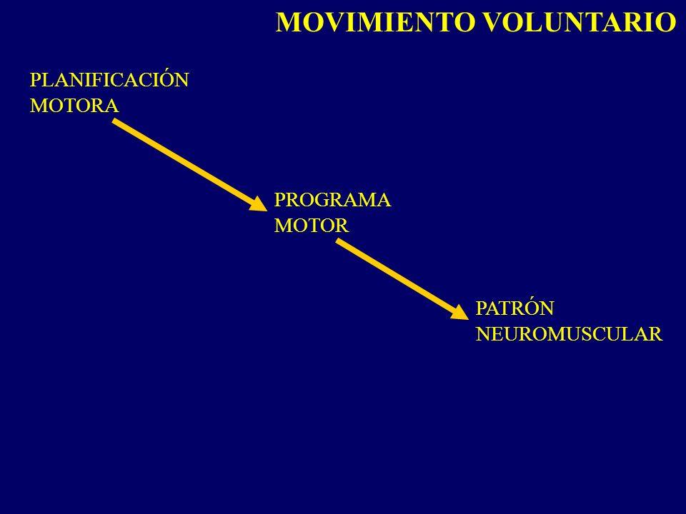 PLANIFICACIÓN MOTORA PROGRAMA MOTOR PATRÓN NEUROMUSCULAR MOVIMIENTO VOLUNTARIO